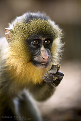 Just A Taste (Korso87) Tags: portrait animal canon eyes sharing piece macaque