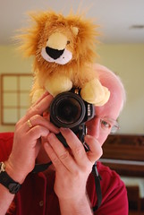 I Ain't Lion...Today is My First Flickrversary! (Praying for Lions) Tags: lion first explore sp flickrversary today 2008 oneyear addiction mirrorshot shutterbug mirrormirroronthewall ayearlater magicdonkey photobug march14th 366days webkinz nikond40x firstflickrversary prayingforlions aintlion shootingwithlions webkinzlion wwwwebkinzcom magicdonkeywhereareye keepshooting