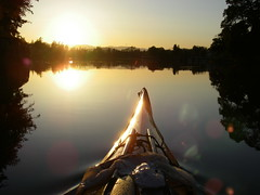 IMGP0921 (chaffneue) Tags: kayak kayaking paddle paddling victoria b bc gorge waterway inner harbour tillicum narrows johnson street bridge birds