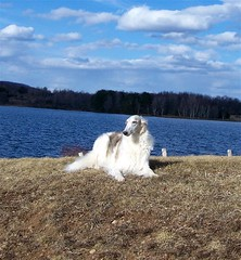 Myka - Rose Valley Lake (Ferlinka Borzoi (Deb West)) Tags: dog lake rose valley russian sighthound borzoi wolfhound
