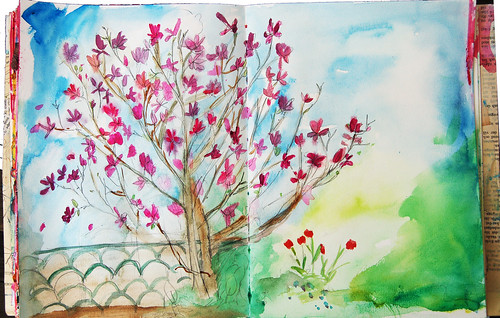 Dad's magnolia