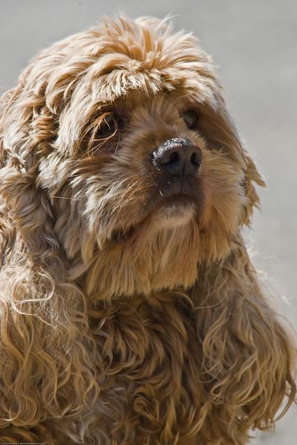 Buffy Baird Dog buffy-baird-01june2008-1