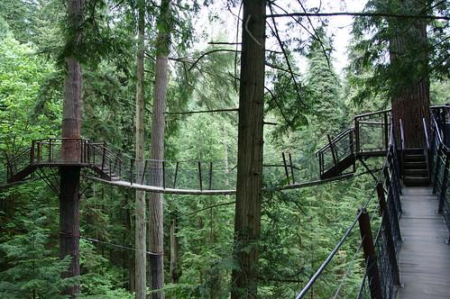 treetops advanture