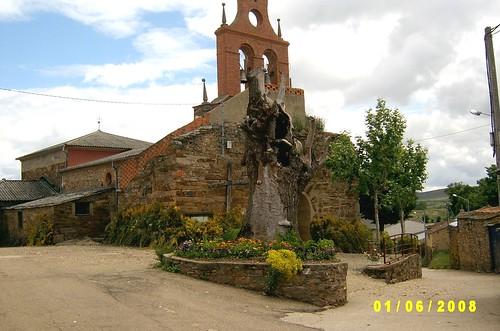 Iglesia y negrillico de Abejera con Flores Corpus