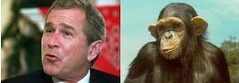For many years President Bush has been compared to chimps, and the chimps haven't complained yet.