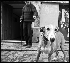 s/t (mdvagua) Tags: k10d bn perro aficinonados marianodelvalle