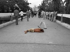 """"""" The Rebel """"   
