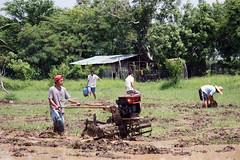 Ka Gerry and Company (JP Dela Paz) Tags: farm farmer handtractor