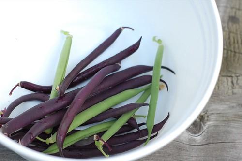 bean harvest #1