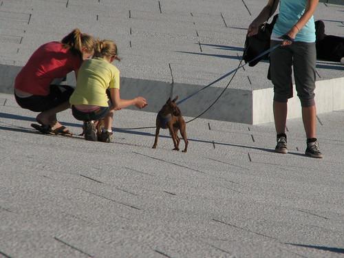 En hund etter opera