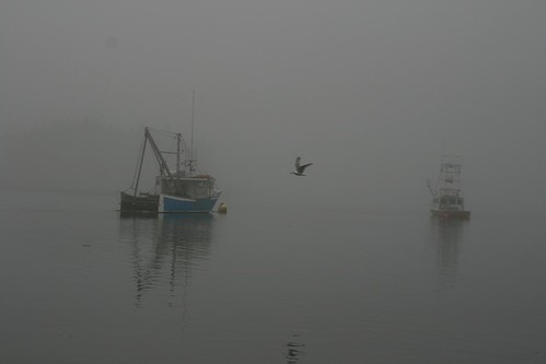 Morning Fog with seagull