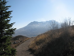 Mount St. Helens and tree