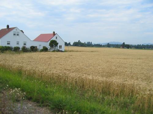 Farm, Skagit flats
