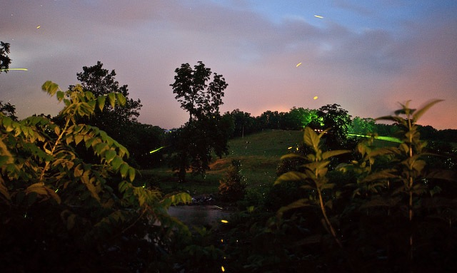 Fireflies, Cootes Store, Virginia