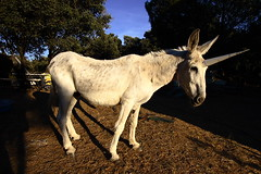 Spanish Days (al cafone) Tags: summer spain estate donkey espana burro verano unicorn spagna asino hcsp trabuco lpv alessandromarchi hafp cienicientos lietam moilubov fds24hdrkaranka ypirtg