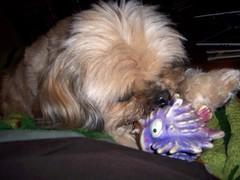 Chew Toy (k8southern) Tags: chewie