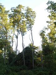 S1051644 (b0jan) Tags: tree beaty landing grandriver