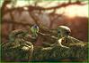 SQUIBBON calabón, inteligencia en los árboles