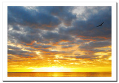 Solitary gull / Gaviota solitaria.- (ancama_99(toni)) Tags: ocean trip travel blue light sunset sea vacation sky espaa naturaleza sun holiday seascape color sol beach nature water animals clouds marina sunrise landscape geotagged atardecer photography dawn soleil mar photo interestingness interesting spain agua nikon espanha europa europe waves seascapes photos lanzarote playa canarias photographic explore amanecer nubes canary 1855mm nikkor paysage 2008 espagne paesaggi olas canaryislands ocaso islas spanien paisagens oceano marinas d60 naturesfinest 50faves nikkor1855 25faves abigfave aplusphoto ultimateshot interesantsimo goldstaraward flickrlovers