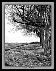 Sentinels ll (Nightwing5-limited Flickr time) Tags: autumn trees blackandwhite nature landscapes fourseasons blueribbonwinner supershot abigfave anawesomeshot almostanything amazingamateur elitephotography goldstaraward dragongoldaward arealgem flickrbestpics damnwishidtakenthat dragondaggerphoto nightwing5 flickrmasterpieces flickrclassique