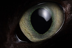 Cat's eye (Lord V) Tags: macro eye cat naturesfinest vosplusbellesphotos