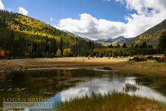 Lockett Meadow, Flagstaff Arizona (Logan Brumm Photography and Design) Tags: world california november flowers school wild summer arizona lake snow storm cold reflection green fall water colors grass weather june yellow clouds america fire photography gold march town photo spring pond october san colorful warm university downtown seasons tank hiking wildlife small may meadow july fluffy grand august canyon september schultz changing alpine flagstaff april aspens wildflowers peaks logan breeze rim northern arrowhead fransisco springtime 2012 grassy nau lockett blew brumm medows lbrumm loganbrumm aot2009contest