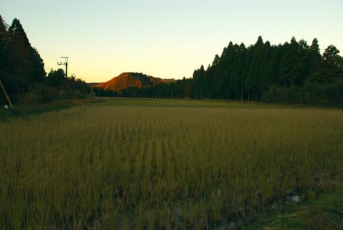 黄昏の田畑