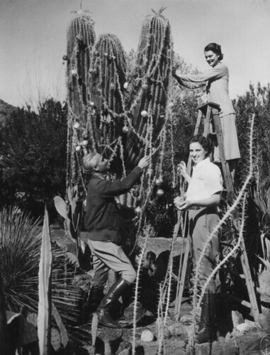 cactus christmas