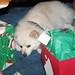 Buster's Christmas Loot