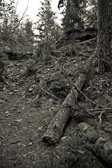 Zauberwald (crosathorian) Tags: forrest natur wald wendelstein auenland zauberwald ef247028l