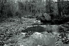 ---_0232 (juroca) Tags: nature forest franklloydwright pa fallingwater westernpennsylvania laurelhighlands