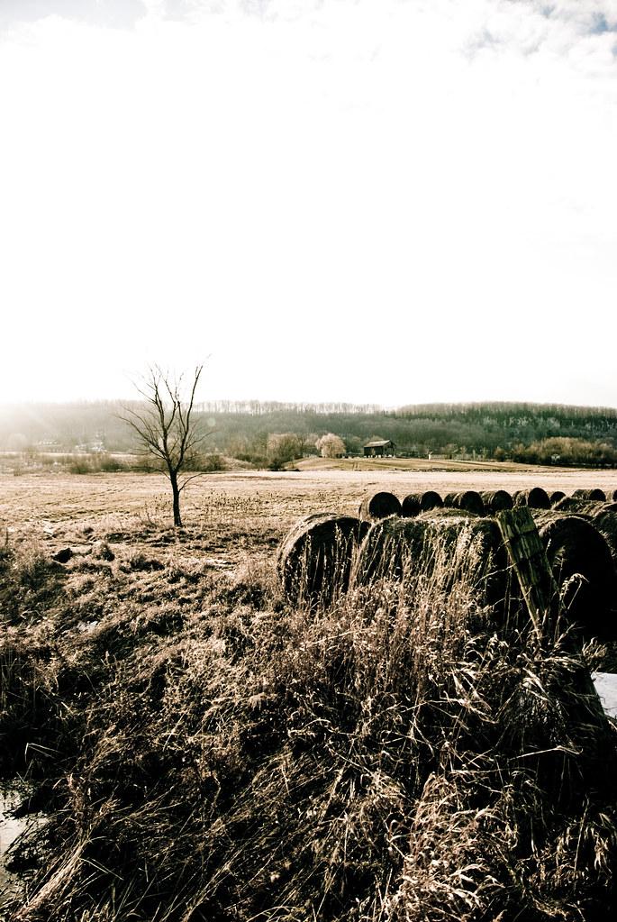Fields-8161.jpg