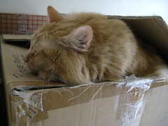 In the box, or on the box -- a cat's philosophical conundrum