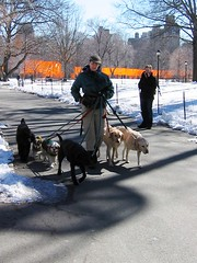IMG_0016b (DutchAstrid) Tags: new york nyc newyorkcity orange newyork art gates centralpark saffron christo dogwalker gatesmemory