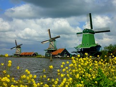 Spring at the mills (Frans.Sellies) Tags: holland clouds nederland thenetherlands windmills mills paysbas olanda zaanseschans hulanda niederlande  hollandia   holandia hollanda pasesbajos pasesbaixos   poelenburg alankomaat   gekroonde  nizozemsko degekroondepoelenburg  nyderlandai      nderlande p1300630