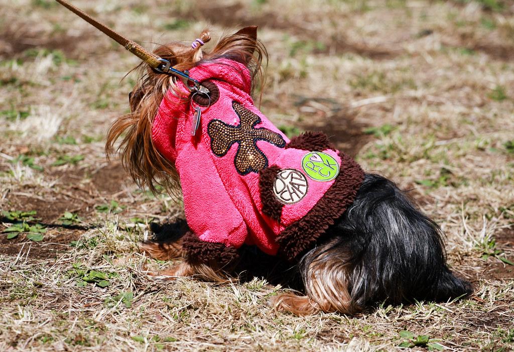 Pets at Yoyogi Park - (Day 21 Holiday 2011)