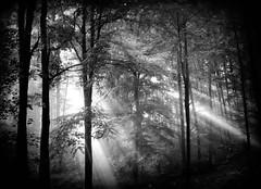 AndThereWasLight (BphotoR) Tags: trees light bw forest germany deutschland soft hessen july powershot explore mystical rays juli schwarzweiss wald mystisch odenwald naturesfinest strahlen bergstrasse supershot idream silhouetts juhhe andtherewaslight anawesomeshot macigal mygearandme mygearandmepremium mygearandmebronze mygearandmesilver mygearandmegold bphotor mygearandmeplatinum mygearandmediamond
