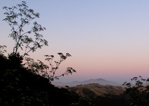 Queen Anne's lace and Mount Diablo at sunset