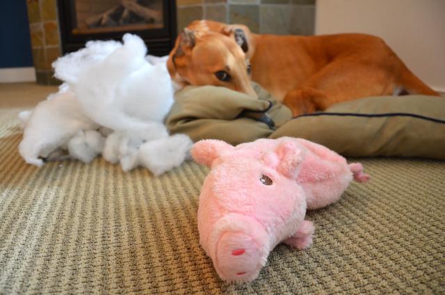 gravy vs. pig