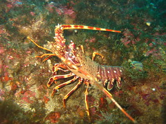 img2785mr9 (coismarbella) Tags: marbella crustaceos