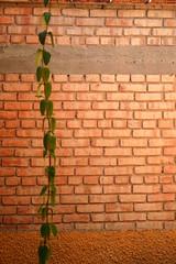 La pared (Doc Albores) Tags: mxico pared coahuila lalaguna torren enrredadera golddragon comarcalagunera abigfave docalbores goldstaraward dragongoldaward