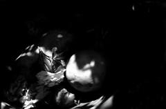 sinfonie decadenti.. (D@deluc) Tags: shadow blackandwhite bw flower nature rose lights lemon rosa natura ombre luci limone naturamorta