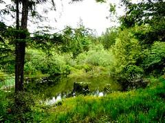 the pond (calamityjan2008) Tags: trees green water waterlilies ponds bushes impressedbeauty