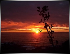 Atardecer 2 (Errlucho) Tags: chile sol contraluz atardecer rojo playa colores