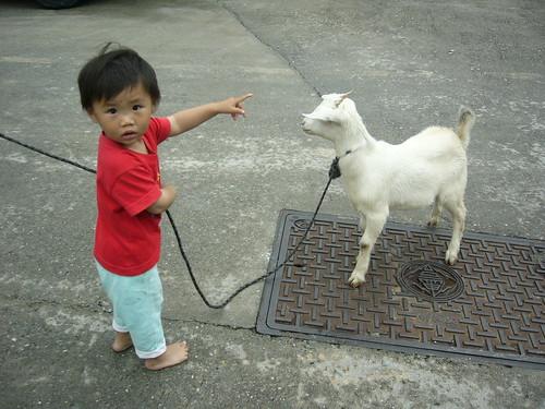 Kid and Lamb