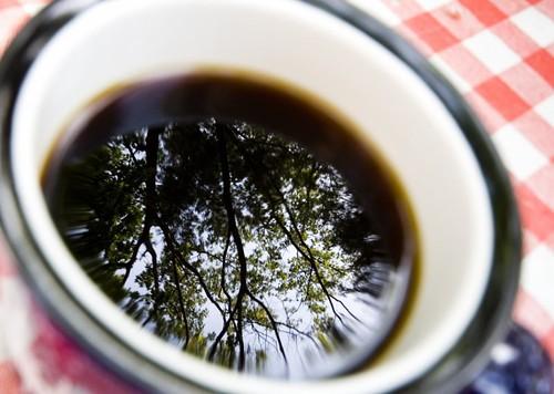 Deciduous Coffee