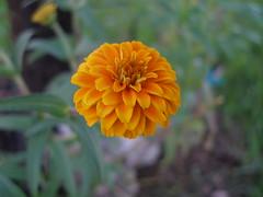 P9200022 (roseiggy) Tags: flowers subject florafauna