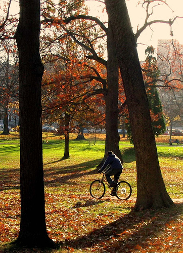 Fall_in_Deering_Oaks_Park