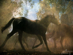 Dusty&Wild, Free. (AntonioArcos aka fotonstudio) Tags: horses espaa caballos andaluca spain bravo huelva dust texturas almonte doana polvo yeguas themoulinrouge jinetes xoxoxoxox mywinners fotonstudio antonioarcos sacadelasyeguas thegardenofzen