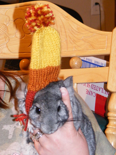 Chinchilla 002